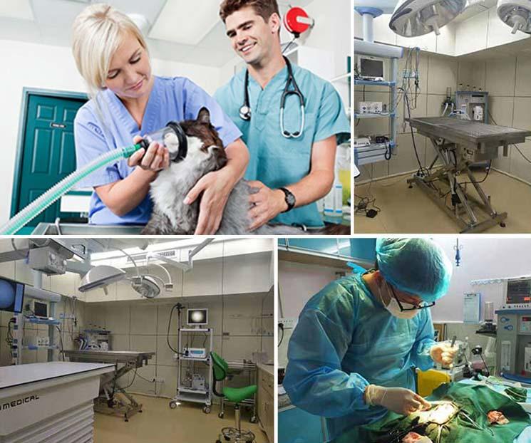 Clínica veterinaria, Hospital de animales, Laboratorio, Instituciones científicas, Escuela veterinaria.